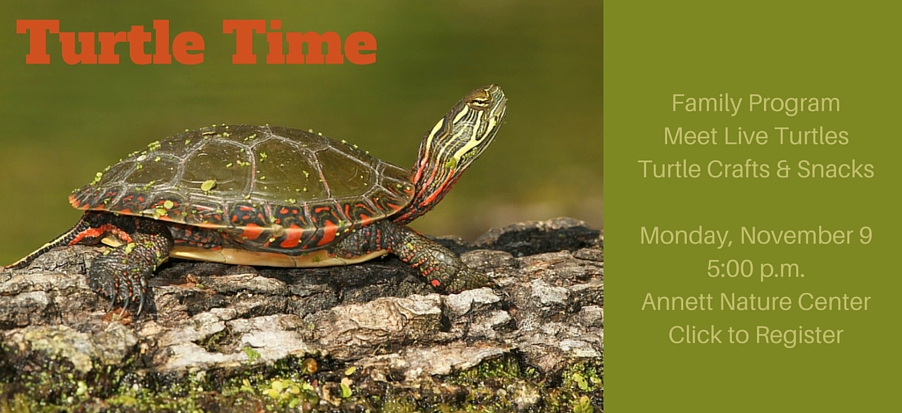 Turtle-Time