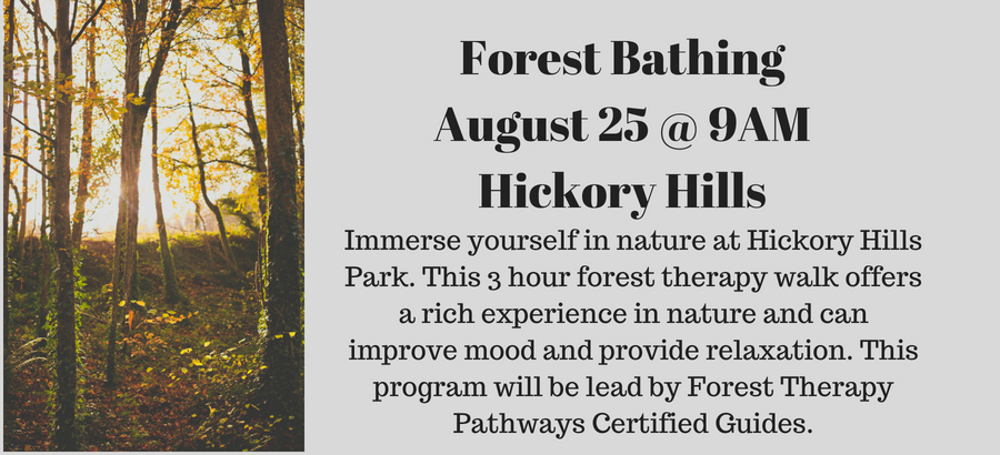 Forest-BathingAugust-25-@-9AMHickory-Hills-2