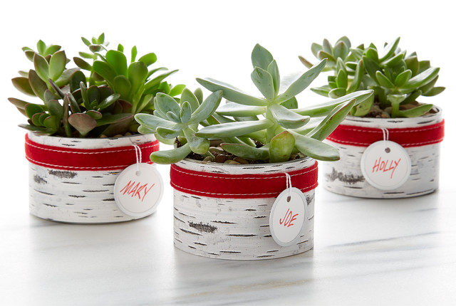... Birch Succulent Planter, Evergreen Centerpiece, Or Glass Filled With  Festive Rocks U0026 Succulent Plant. Prices Vary From $10 $20 Per Craft.