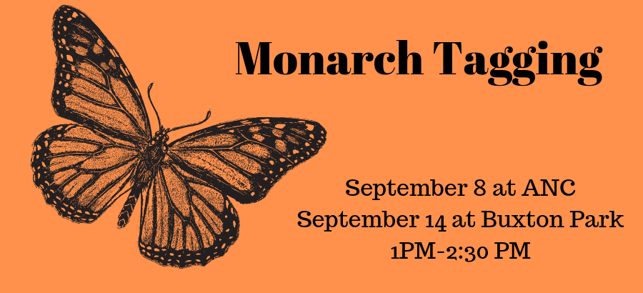 Monarch-Tagging-2
