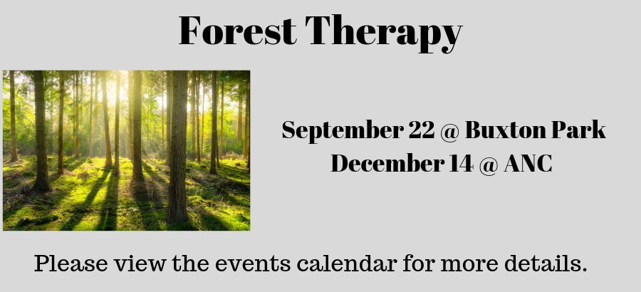 Forest-Therapy