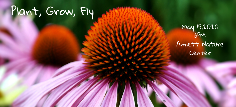 Plant-Grow-Fly.-sliderpng